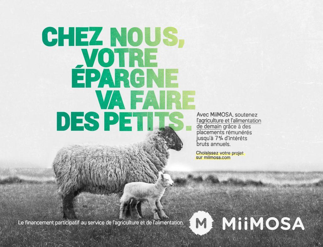 Visuel générique mouton campagne Miimosa